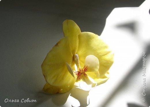 Орхидея зажим. Холодный фарфор. фото 2