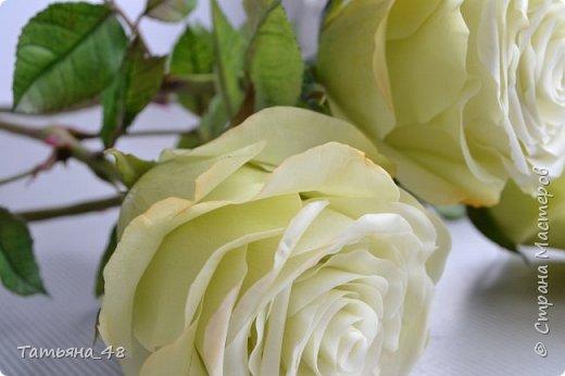 Здравствуйте жители Страны Мастеров! Что то я зачастила  к вам.... Вот результат моей двухнедельной ночной жизни... Розы  создавала по МК Майи Немец (тоже житель Страны) на заказ ... Приготовьтесь.... фотосессия удалась.... фото 4