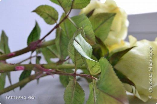 Здравствуйте жители Страны Мастеров! Что то я зачастила  к вам.... Вот результат моей двухнедельной ночной жизни... Розы  создавала по МК Майи Немец (тоже житель Страны) на заказ ... Приготовьтесь.... фотосессия удалась.... фото 5