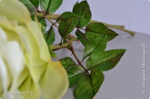 Здравствуйте жители Страны Мастеров! Что то я зачастила  к вам.... Вот результат моей двухнедельной ночной жизни... Розы  создавала по МК Майи Немец (тоже житель Страны) на заказ ... Приготовьтесь.... фотосессия удалась.... фото 8