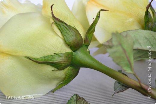 Здравствуйте жители Страны Мастеров! Что то я зачастила  к вам.... Вот результат моей двухнедельной ночной жизни... Розы  создавала по МК Майи Немец (тоже житель Страны) на заказ ... Приготовьтесь.... фотосессия удалась.... фото 7