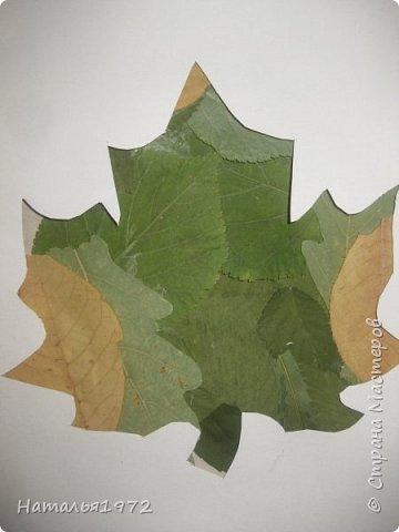 Кленовый лист фото 6