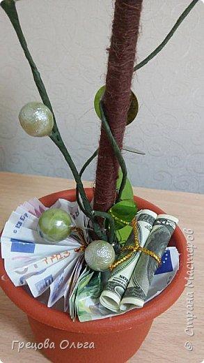Топиарий Денежное дерево фото 3