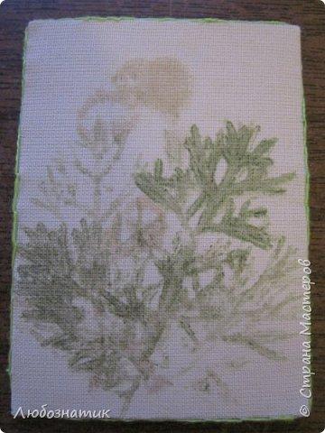 """Всем большущий привет! Представляю вам очередную серию АТС карточек """"Зелёные силуэты"""".  Техника оттиск (отпечаток) растений на ткани. Идею я  увидела в интеренете  Можете выбирать понравившуюся карточку, но хочу предупредить, тем кому я должна АТС карточки будет отдаваться приоритет.  фото 7"""