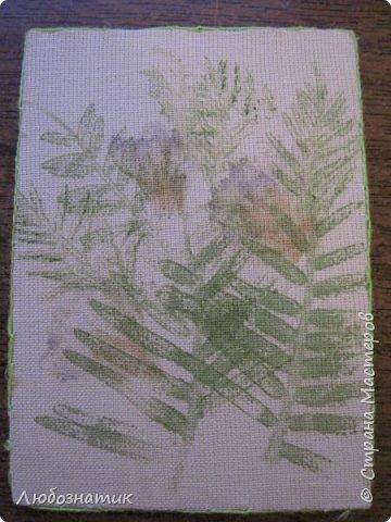 """Всем большущий привет! Представляю вам очередную серию АТС карточек """"Зелёные силуэты"""".  Техника оттиск (отпечаток) растений на ткани. Идею я  увидела в интеренете  Можете выбирать понравившуюся карточку, но хочу предупредить, тем кому я должна АТС карточки будет отдаваться приоритет.  фото 11"""