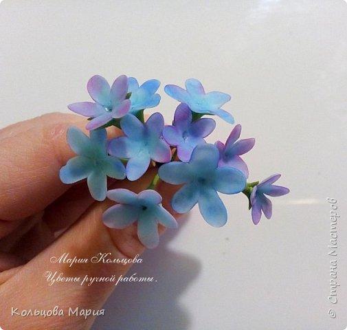 Всем привет! Хочу поделится своим мастер-классом по лепке незабудок, именно это фото живых цветов меня и вдохновило, старалась лепить цветочки так же с оттенками сиреневого и розового как на фото.  фото 7