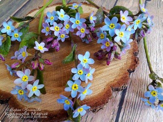 Всем привет! Хочу поделится своим мастер-классом по лепке незабудок, именно это фото живых цветов меня и вдохновило, старалась лепить цветочки так же с оттенками сиреневого и розового как на фото.  фото 15