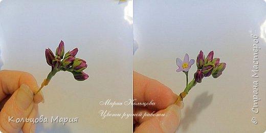 Всем привет! Хочу поделится своим мастер-классом по лепке незабудок, именно это фото живых цветов меня и вдохновило, старалась лепить цветочки так же с оттенками сиреневого и розового как на фото.  фото 10