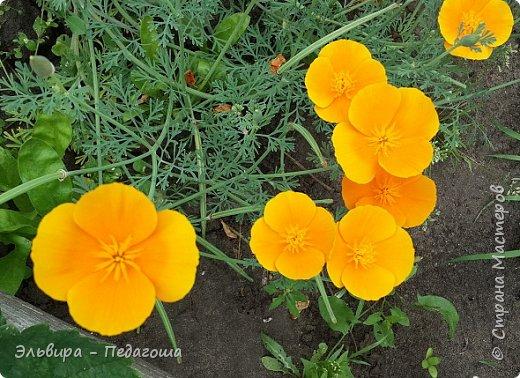 Первым цветом в моей палитре будет, конечно же, жёлтый! Лето - это Солнце и разноцветье трав, цветов  и неба!!! фото 10