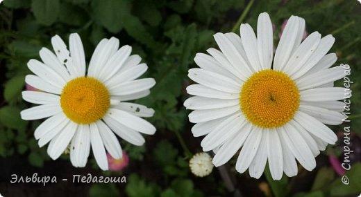 Первым цветом в моей палитре будет, конечно же, жёлтый! Лето - это Солнце и разноцветье трав, цветов  и неба!!! фото 8