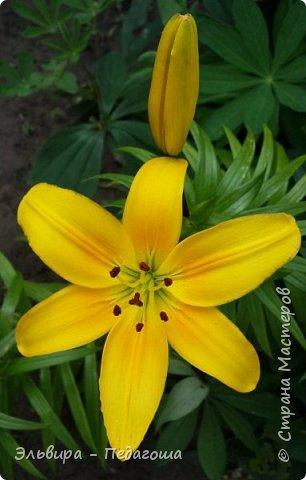 Первым цветом в моей палитре будет, конечно же, жёлтый! Лето - это Солнце и разноцветье трав, цветов  и неба!!! фото 5