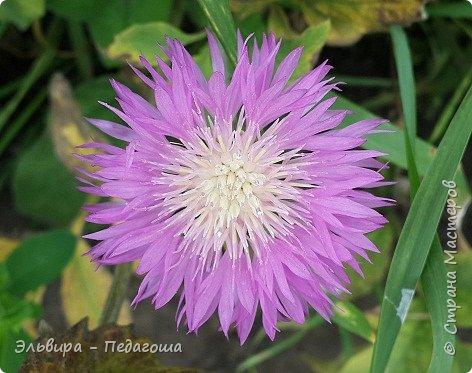 Первым цветом в моей палитре будет, конечно же, жёлтый! Лето - это Солнце и разноцветье трав, цветов  и неба!!! фото 30