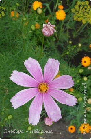 Первым цветом в моей палитре будет, конечно же, жёлтый! Лето - это Солнце и разноцветье трав, цветов  и неба!!! фото 28