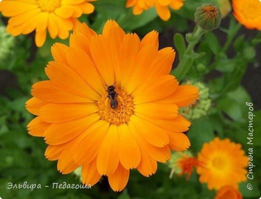 Первым цветом в моей палитре будет, конечно же, жёлтый! Лето - это Солнце и разноцветье трав, цветов  и неба!!! фото 1