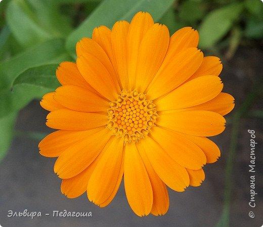 Первым цветом в моей палитре будет, конечно же, жёлтый! Лето - это Солнце и разноцветье трав, цветов  и неба!!! фото 34
