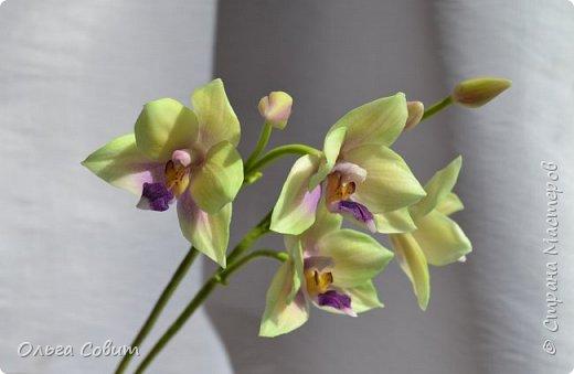 Орхидея. Холодный фарфор фото 2