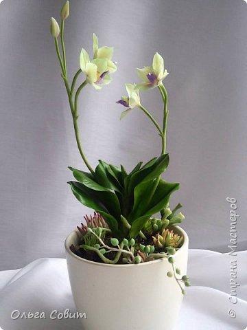 Орхидея. Холодный фарфор фото 4
