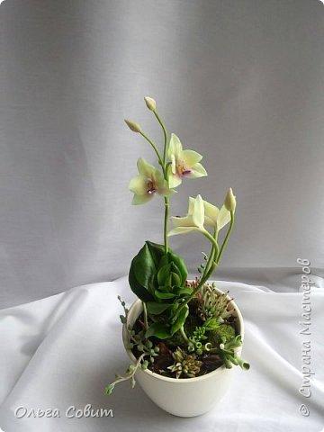 Орхидея. Холодный фарфор фото 5