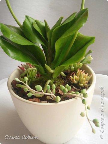 Орхидея. Холодный фарфор фото 6