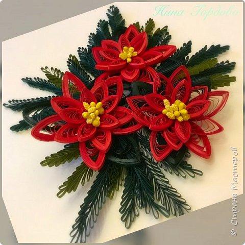 Рождественская звезда-пуансетия! Молочай прекраснейший)))) Само название уже вызывает улыбку и хорошее настроение, правда?)) Многие считают, что пуансетия цветёт один раз, в канун рождества, покупают этот цветок для новогоднего декора, как и елочку, а после праздника не сохраняют. На самом деле растение просто любит больше внимания и заботы))) А вы знали, что цветок пуансетии - это мелкие соцветия, серединка? А эти яркие лепестки - прицветия, листья? Для меня это стало неожиданностью)) И темой для творческого эксперимента! Попробую разные варианты кручения и цветовую гамму . Фото будут по мере готовности. А сейчас первая звездочка)))) фото 6