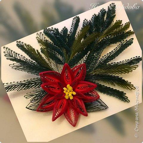 Рождественская звезда-пуансетия! Молочай прекраснейший)))) Само название уже вызывает улыбку и хорошее настроение, правда?)) Многие считают, что пуансетия цветёт один раз, в канун рождества, покупают этот цветок для новогоднего декора, как и елочку, а после праздника не сохраняют. На самом деле растение просто любит больше внимания и заботы))) А вы знали, что цветок пуансетии - это мелкие соцветия, серединка? А эти яркие лепестки - прицветия, листья? Для меня это стало неожиданностью)) И темой для творческого эксперимента! Попробую разные варианты кручения и цветовую гамму . Фото будут по мере готовности. А сейчас первая звездочка)))) фото 7