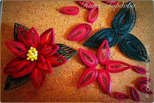 Рождественская звезда-пуансетия! Молочай прекраснейший)))) Само название уже вызывает улыбку и хорошее настроение, правда?)) Многие считают, что пуансетия цветёт один раз, в канун рождества, покупают этот цветок для новогоднего декора, как и елочку, а после праздника не сохраняют. На самом деле растение просто любит больше внимания и заботы))) А вы знали, что цветок пуансетии - это мелкие соцветия, серединка? А эти яркие лепестки - прицветия, листья? Для меня это стало неожиданностью)) И темой для творческого эксперимента! Попробую разные варианты кручения и цветовую гамму . Фото будут по мере готовности. А сейчас первая звездочка)))) фото 2