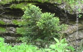 Гуамское ущелье. Краснодарский край. фото 14