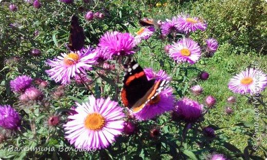 Добрый день мастера и мастерицы!!!!Уже осень пришла,а у меня все еще васильки с ромашками расцветают. фото 8