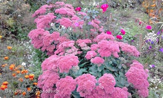 Добрый день мастера и мастерицы!!!!Уже осень пришла,а у меня все еще васильки с ромашками расцветают. фото 9