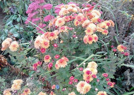 Добрый день мастера и мастерицы!!!!Уже осень пришла,а у меня все еще васильки с ромашками расцветают. фото 10