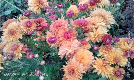 Добрый день мастера и мастерицы!!!!Уже осень пришла,а у меня все еще васильки с ромашками расцветают. фото 11