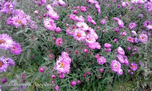 Добрый день мастера и мастерицы!!!!Уже осень пришла,а у меня все еще васильки с ромашками расцветают. фото 12