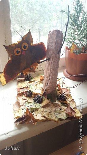 Маленький совенок сидит на ветке. Вместо дерева использовали картон. фото 1