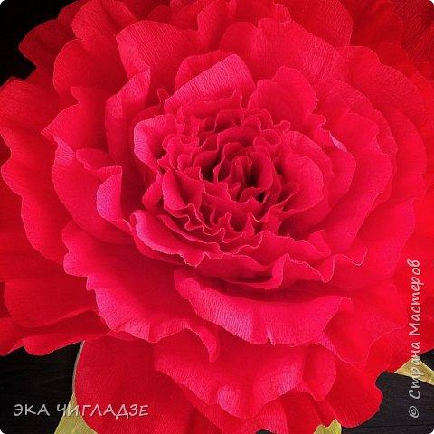 Это мой первый цветок фото 4