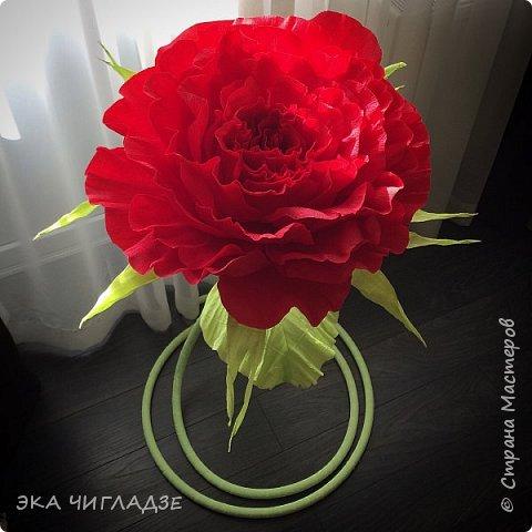 Это мой первый цветок фото 2