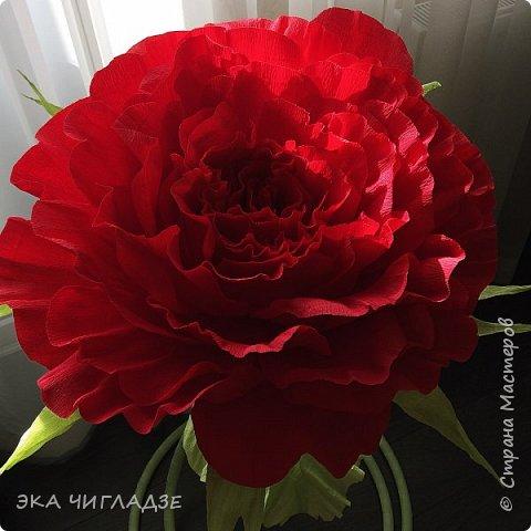 Это мой первый цветок фото 3