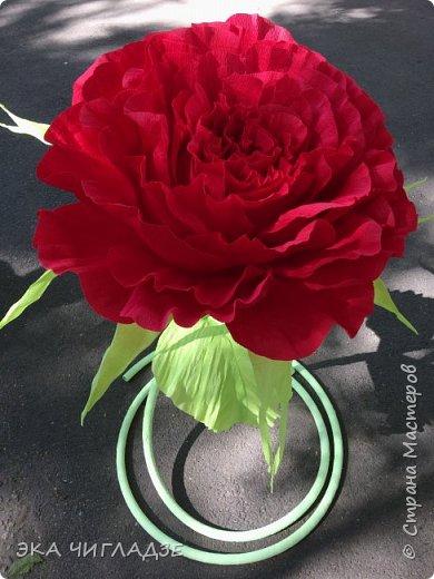 Это мой первый цветок фото 5