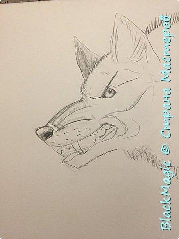 Волкособ. Помесь собаки и волка. Вот что будет если прочитав новости врубить Металлику и сесть рисовать. фото 8