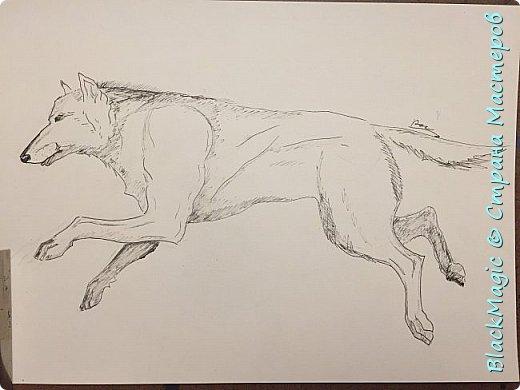Волкособ. Помесь собаки и волка. Вот что будет если прочитав новости врубить Металлику и сесть рисовать. фото 6