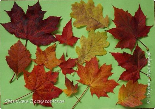 Наступила осень - пора дождей, ОРЗ и творчества. Деревья на улице - глаз не оторвать. Особенно прекрасны клены. И нельзя не собрать букет листьев. Но листья скручиваются, а если засушить - блекнут. А так хочется сохранить их красоту. Поэтому я выбираю технику витража и делаю листья из пластиковых обложек. Пусть светятся в пасмурный день. фото 15