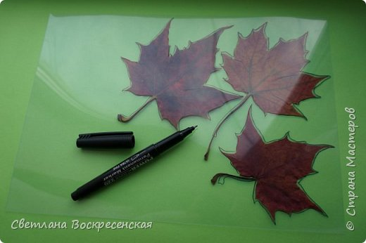 Наступила осень - пора дождей, ОРЗ и творчества. Деревья на улице - глаз не оторвать. Особенно прекрасны клены. И нельзя не собрать букет листьев. Но листья скручиваются, а если засушить - блекнут. А так хочется сохранить их красоту. Поэтому я выбираю технику витража и делаю листья из пластиковых обложек. Пусть светятся в пасмурный день. фото 3