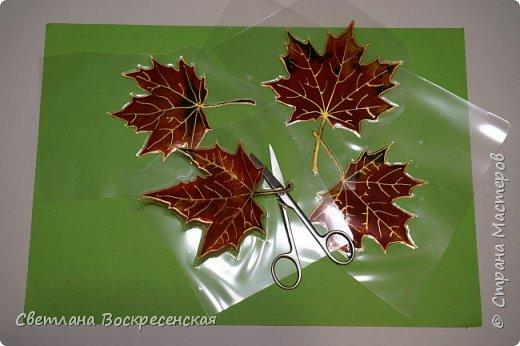 Наступила осень - пора дождей, ОРЗ и творчества. Деревья на улице - глаз не оторвать. Особенно прекрасны клены. И нельзя не собрать букет листьев. Но листья скручиваются, а если засушить - блекнут. А так хочется сохранить их красоту. Поэтому я выбираю технику витража и делаю листья из пластиковых обложек. Пусть светятся в пасмурный день. фото 10