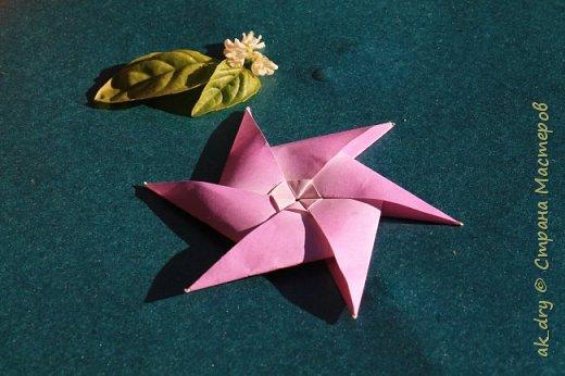 HPBD star фото 7