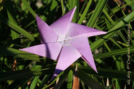 HPBD star фото 6