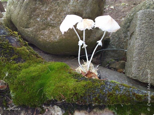 Добрый вечер! Сегодня  я с грибами) Осень... не только по календарю, но и  в творчестве. Вот такие поганочки вырастила) фото 5