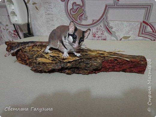 """Здравствуйте уважаемые Мастера и Мастерицы, давно не выставляла своих работ, вот такую мышку я слепила на конкурс """"Животные моего края, занесенные в красную книгу"""", а название её """"Соня садовая"""" фото 2"""