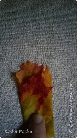 Доброго времени суток всем мастерам и мастерицам СМ. Несмотря на дожди каждый день, на улице все же одна из самых красивейших пор года - золотая осень . Так хочется собрать все листья, наделать различных поделок.  фото 5