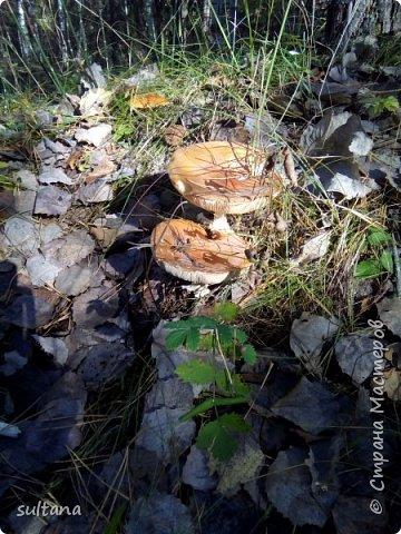 По грибы... или хорошо в лесу. фото 5