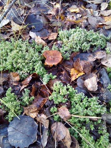 По грибы... или хорошо в лесу. фото 8