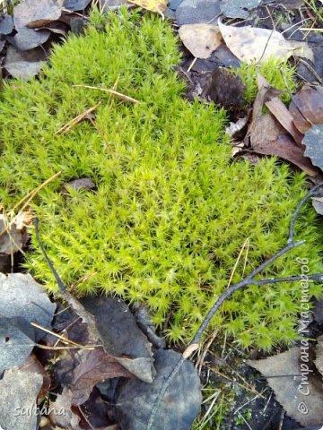 По грибы... или хорошо в лесу. фото 7
